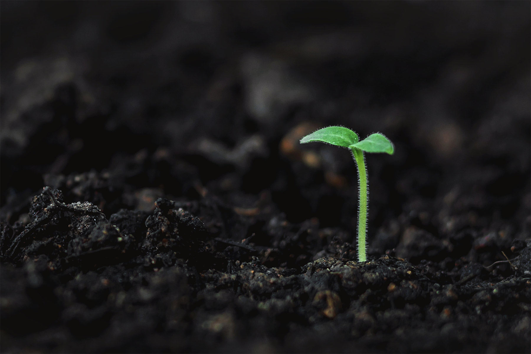 Sprout in the earth